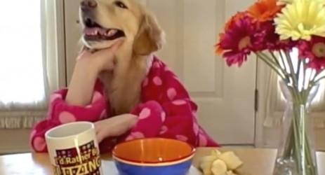 Ein Hund isst sein Frühstück